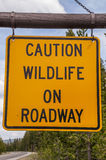 Caution Wildlife on Roadway Sign. Caution widlife on roadway sign in Yellowstone National Park to warn visitors of potential danger Stock Photography