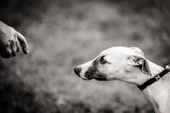 Cautious approach Royalty Free Stock Image