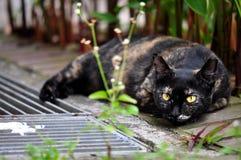 Cautious Cat Stock Image