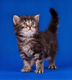 Cautious kitten Stock Photo