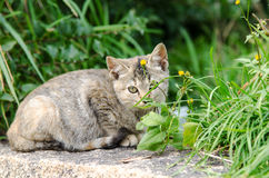 Cautious kitten (Small Cat). Cautious kitten (Against the background of grass Royalty Free Stock Photo