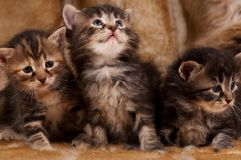 Cautious kittens. Cautious little kittens over dirty mustard color background Stock Photo