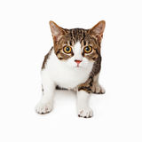 Cautious tabby kitten looking at camera. Cautious tabby kittin sitting and looking at camera Stock Image