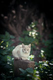 White cat. Cautious white cat in the forest Royalty Free Stock Photo