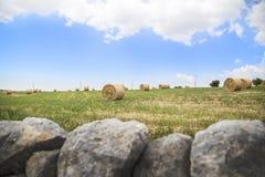 Cauzione del fieno che raccoglie nel campo dorato Fotografia Stock