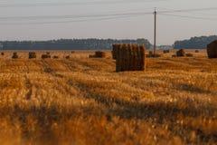 Cauzione del fieno che raccoglie nel paesaggio dorato del campo Fotografia Stock Libera da Diritti