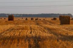 Cauzione del fieno che raccoglie nel paesaggio dorato del campo Fotografie Stock