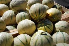 Cavaillon melon Royalty Free Stock Photo
