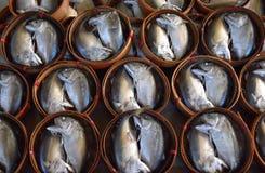 Cavala de caboz Fotografia de Stock