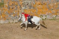 A cavalaria luta, soldado inoperante no cavalo branco Fotografia de Stock Royalty Free