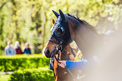 Cavaleiro antes da competição do circuito de corrida de cavalos Foto de Stock Royalty Free