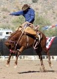 Cavaleiro Bucking do Bronc do rodeio fotos de stock