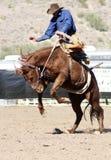 Cavaleiro Bucking do Bronc do rodeio imagem de stock