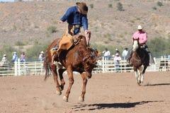 Cavaleiro Bucking do Bronc do rodeio fotografia de stock royalty free