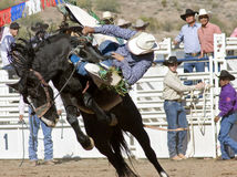 Cavaleiro Bucking do Bronc do rodeio imagem de stock royalty free