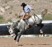Cavaleiro Bucking do Bronc do rodeio foto de stock royalty free