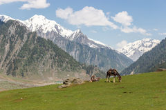 Cavaleiro com o cavalo nas montanhas Imagens de Stock