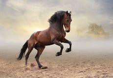 Cavaleiro cortês Fotografia de Stock Royalty Free