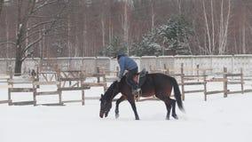 Cavaleiro da mulher na equitação vermelha no anel da neve filme