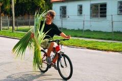 Cavaleiro da palmeira fotografia de stock royalty free