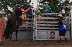 Cavaleiro de Bull no touro de atrás Foto de Stock