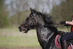 Cavaleiro desconhecido na ação em um cavalo da ligação em ponte da mostra durante o treinamento Imagens de Stock