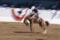 Cavaleiro do bronco Fotografia de Stock Royalty Free