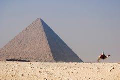 Cavaleiro do camelo Fotografia de Stock