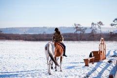 Cavaleiro do cavalo do inverno fotos de stock
