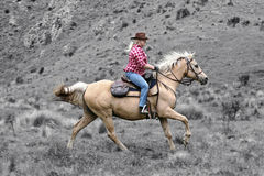 Cavaleiro do cavalo fêmea imagens de stock royalty free