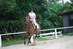 Cavaleiro do cavalo fêmea Fotografia de Stock