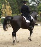 Cavaleiro do Dressage Imagem de Stock Royalty Free