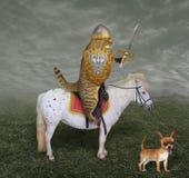 Cavaleiro do gato em um cavalo com uma espada fotografia de stock royalty free