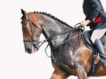 Cavaleiro e cavalo - close up Fotos de Stock Royalty Free