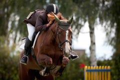 Cavaleiro e cavalo da ligação em ponte do chuveiro Fotografia de Stock Royalty Free