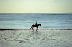 Cavaleiro em uma praia Imagens de Stock Royalty Free