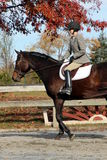 Cavaleiro fêmea no cavalo de Brown na queda Fotografia de Stock Royalty Free