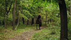 Cavaleiro fêmea novo no cavalo em um galope obscuro da floresta Galope do fascínio Equitação em um dia ensolarado Corrida de cava vídeos de arquivo