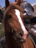Cavaleiro no cavalo imagem de stock