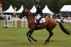 Cavaleiro no cavalo em Saumur França Fotos de Stock Royalty Free
