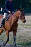 Cavaleiro no cavalo no campo Fotografia de Stock
