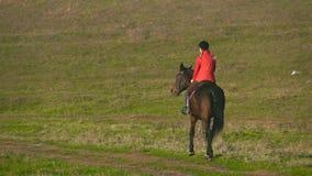 Cavaleiro que galopa em um campo verde a cavalo Vista traseira Movimento lento video estoque