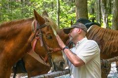Cavaleiro que importa-se com seu cavalo na fuga fotos de stock royalty free