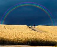 Cavaleiros da bicicleta Imagem de Stock