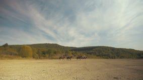Cavaleiros do cavalo que viajam nas montanhas vídeos de arquivo