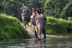 Cavaleiros do elefante fotos de stock