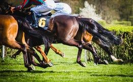 Cavaleiros na competição do circuito de corrida de cavalos Imagem de Stock