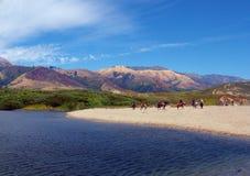 Cavaleiros na paisagem típica de Califórnia Foto de Stock Royalty Free