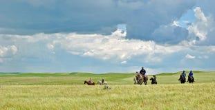 Cavaleiros na pradaria ensolarada Imagens de Stock