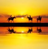 Cavaleiros refletidos Imagem de Stock